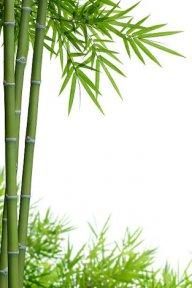 Tourist Bamboo