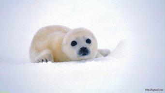 A_Tiny_And_Fluffy_Mammal