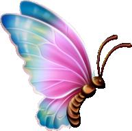 nightbutterfly