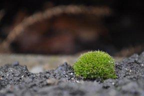 Mosstree