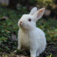 WhitesRabbit48
