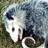 DeadOpossum
